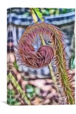 Abstract view of Unfurling crosiers on Tree Fern, Canvas Print