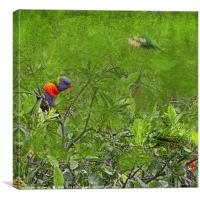 Grunge Rainbow Lorikeets in a tree, Canvas Print