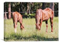 Horses feeding in a field, Canvas Print