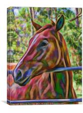 Portrait of beautiful horse, Canvas Print