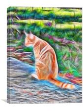 Orange cat sitting on a path in rural Queensland, , Canvas Print
