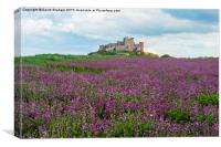 Bamburgh Castle with a field of wild flowers, Canvas Print