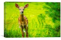 White-Tail Fawns Curiousity, Canvas Print