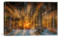 Morning Sunrays, Canvas Print