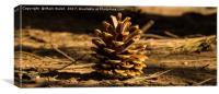 Pine cone, Canvas Print