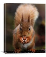 Red Squirrel Feeding, Canvas Print