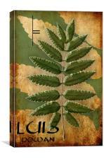 The Ogham Luis Celtic Symbol, Canvas Print
