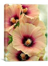 Peach Hollyhocks, Canvas Print