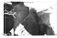 Elephant hug, Canvas Print