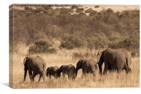 Elephant family, Canvas Print