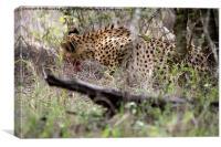 Cheetah , Canvas Print