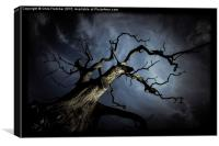 From the darkness it came, Canvas Print