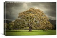 Old oak, Canvas Print