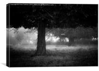 Under the dark canopy, Canvas Print