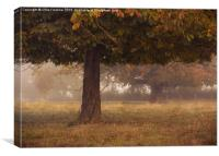 Peeping under the canopy, Canvas Print