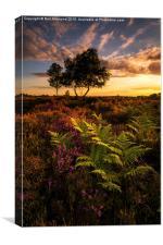 Dunwich Heather and Ferns, Canvas Print