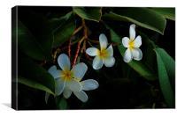 Hawaiian Plumeria, Canvas Print