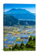 Rice fields, Aso Town, Kyushu, Japan, Canvas Print