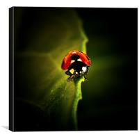 Ladybird on a leaf in Spring, Canvas Print