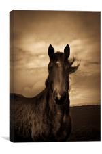 Horse in sepia, Shropshire, England, Canvas Print
