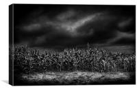 Cornfield at night, Shropshire, Canvas Print