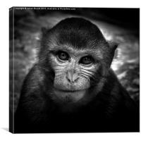 Monkey of Bali, Canvas Print