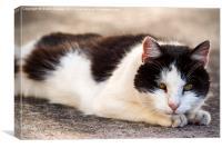 Thomas the cat, Canvas Print