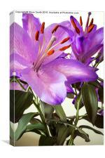 Purple Lilly Portrait, Canvas Print