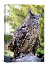 Bengal Eagle Owl, Canvas Print