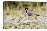 Red-wattled Lapwing, Canvas Print