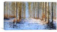 Winter whites., Canvas Print