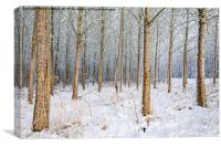 Pole wood., Canvas Print