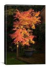 The Maple Tree, Canvas Print