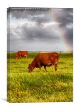 Rainbow at Elmley, Canvas Print