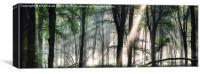 Deep forest morning light, Canvas Print