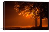 Beautiful trees at night with orange light, Canvas Print