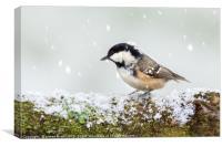 Coal tit wild bird on snowy log, Canvas Print