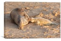 New born seal pup and mother feeding young, Canvas Print