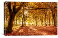 Amazing forest colours in autumn fall, Canvas Print