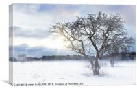 Bare tree in a snow field with sunrise, Canvas Print