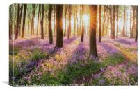 Bluebell forest path at sunrise, Canvas Print