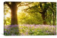 Bluebell wood with magical morning sunrise, Canvas Print