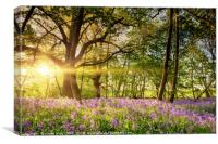 Stunning bluebell forest in spring sunrise, Canvas Print