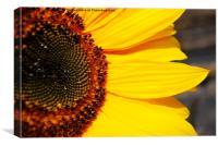 Pure Sunshine, Canvas Print