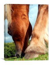Palomino pony grazing., Canvas Print