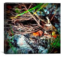 Birch Bark and Leaves., Canvas Print