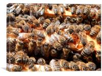 Honey bees on Frames., Canvas Print
