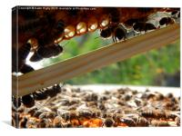 Honey bees at work., Canvas Print
