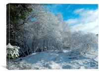 Snow in Puiteachan, Glen Loy, Highlands, Canvas Print