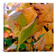 Dew drops on Autumn leaves., Canvas Print
